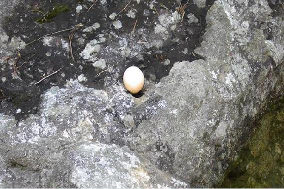 eggstone.jpg
