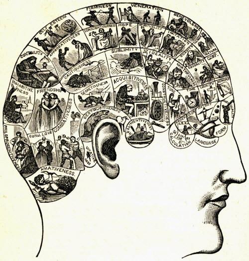 크기변환_phrenological-chart.jpg
