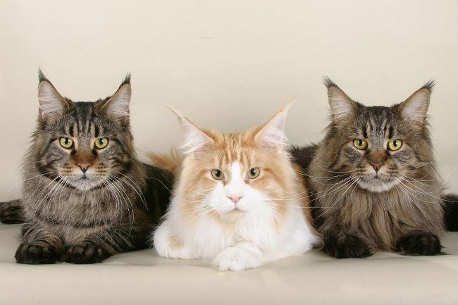 cats-535789_960_720.jpg