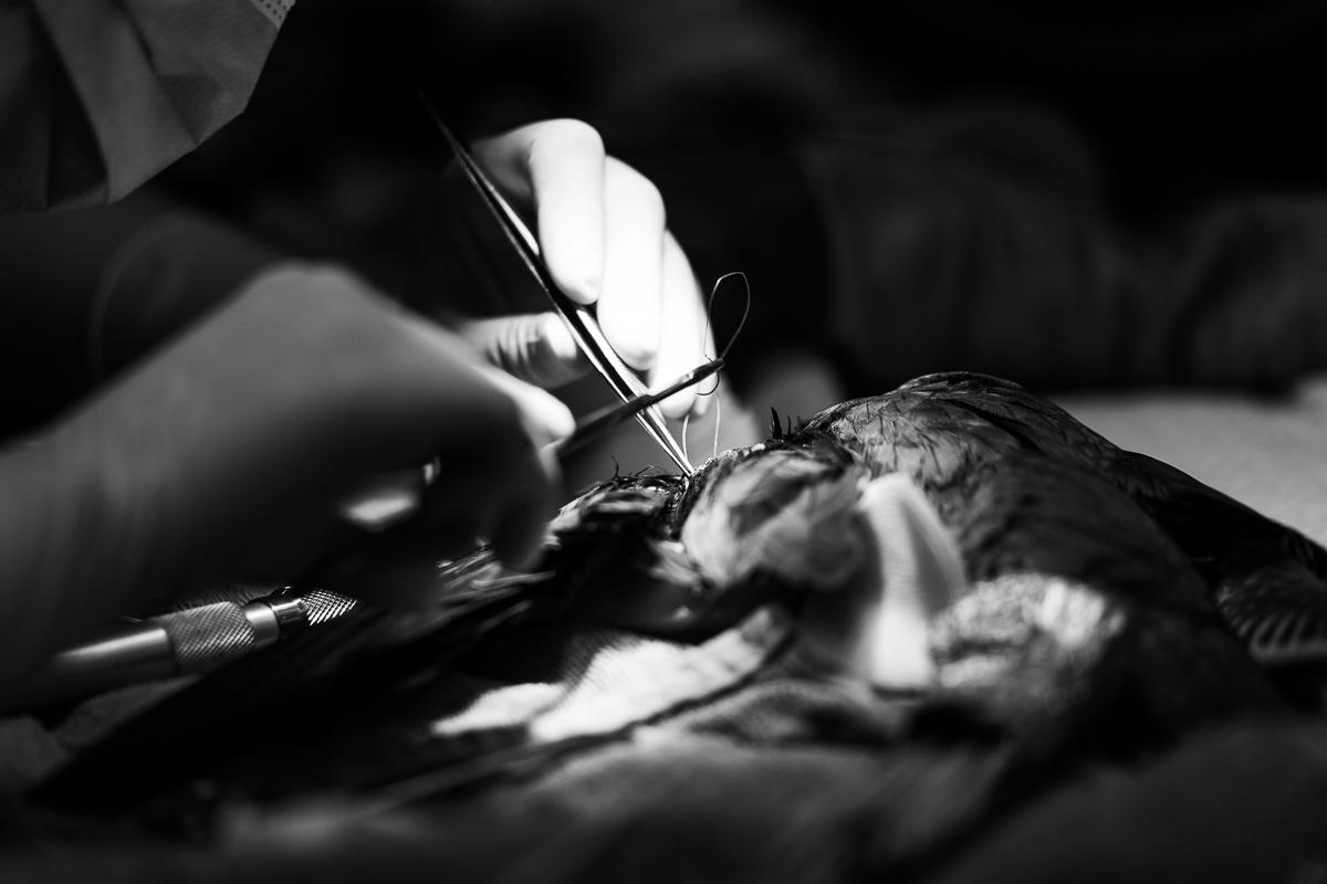 새호리기 수술 (2).jpg