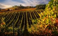 [잡식]교양으로는 쓸모있을 와인 지식 10 : 와인도 변해야 살아남는다