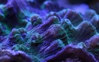 [취미]산호 이야기 3 : 산호의 색깔