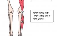 까면서 보는 해부학 만화 2화 : 근육