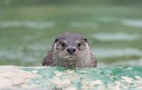 야생동물구조센터 : 어린 동물들이 온다