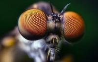 [동물]사파리매거진2580 - 거미