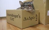 [파토의 호모 사이언티피쿠스 31]나는 슈뢰딩거의 고양이로소이다(해설판)