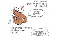 만화로 배우는 곤충의 진화15 : 곤충의 이상한 성생활