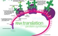 [과학]유전자 분석 서비스 2 : 유전자가 무엇인지부터 알아보자
