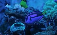 [취미]산호이야기 마지막: 레어템 산호와 해수어
