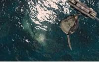 [과학]불가사의한 공룡의 혈압: 둘리 엄마 뇌출혈로 쓰러지다
