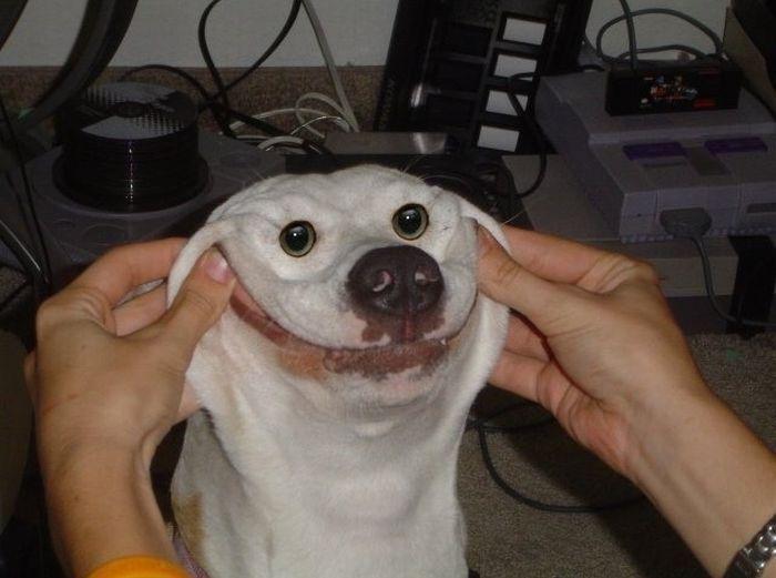 smiling-dog-big.jpg