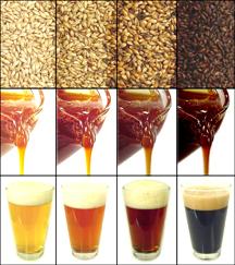 malt & beer.jpg