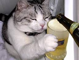 beer cat.jpg