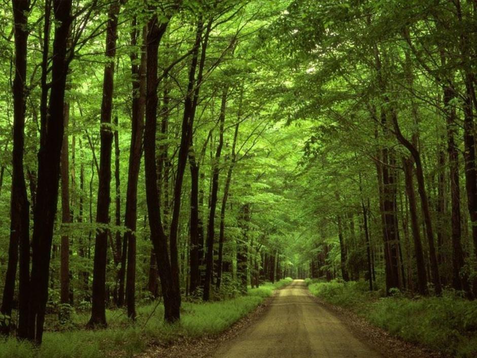 숲속길.jpg