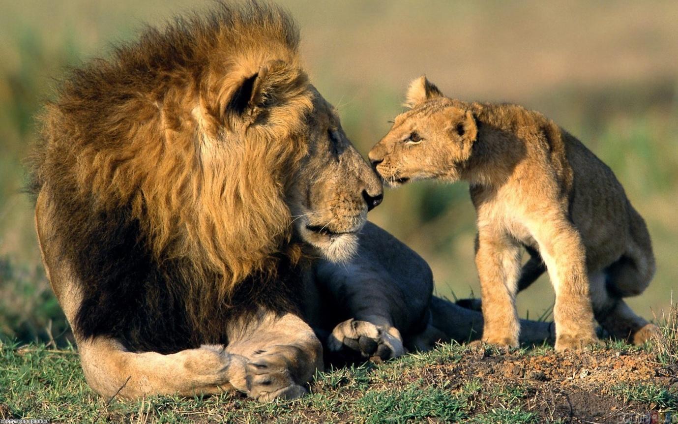 liondadson.jpg