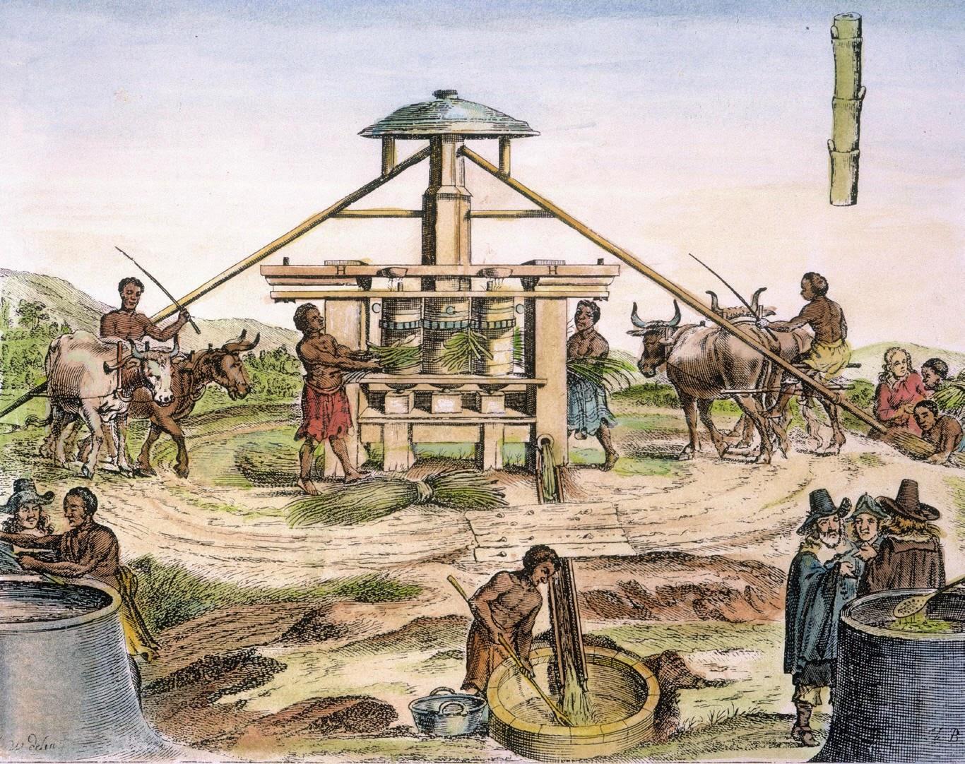 sugar plantation machine.jpg