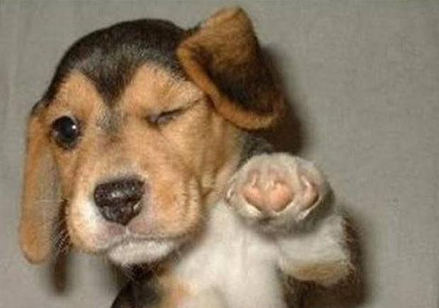 winking-dog.jpg