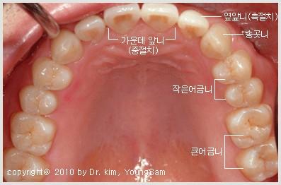 dentition.jpg