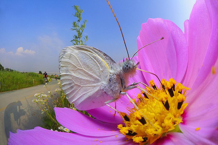 한강변에서 만난 배추흰나비.jpg