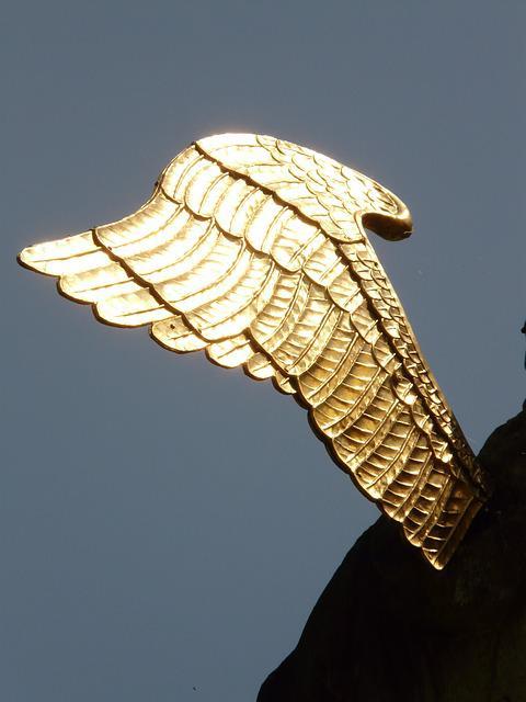 wing-5039_640.jpg