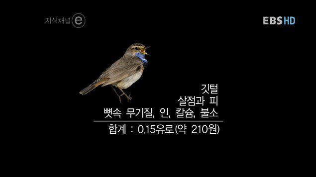 캡처지식채널e.JPG