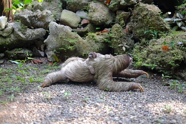 sloth-731297_640.jpg