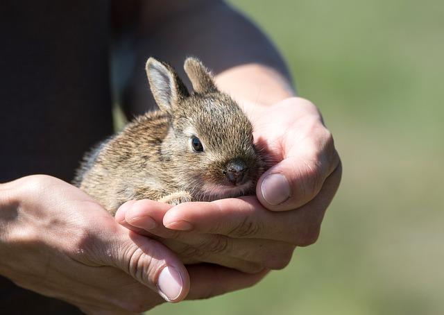 rabbit-913550_640.jpg