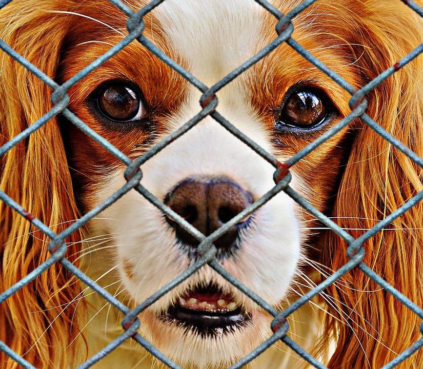 animal-welfare-1116184_960_720.jpg