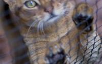 [파토의 호모 사이언티피쿠스 30]나는 슈뢰딩거의 고양이로소이다