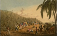 전염병이 바꾼 천조국의 역사2: 구세주, 등장