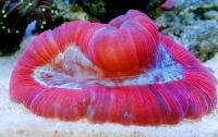 [취미]산호이야기 4: 금수저 산호도 있다?