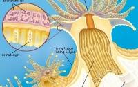 [취미]산호 이야기 2: 산호의 생존전략