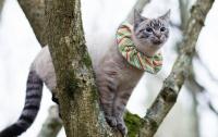 오늘의 뇌피셜 : 정부가 들고양이를 총으로 쏴 죽이기로 했다고?
