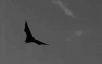 [동물]사파리매거진2580 - 박쥐편