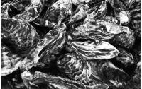 [생활]알고나 먹자 <식재료편> - 갯바위조개와 담수조개